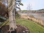 enjoy the private backyard - 10 Cove Hill North Chatham Cape Cod - New England Vacation Rentals