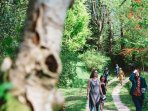 woodland walkways in our 200 acres of sustainable woods on  your doorstep - magical woodlands