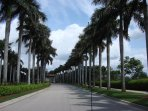 Gated entry lined with Royal Palms