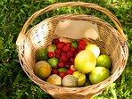 Frutas do Pomar
