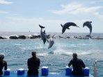 Dolphin spettacolo al Curacao Seaquarium