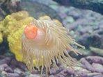 L'abbondanza di vita marina