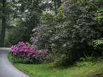 Local Rhododendron and flora