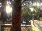 Natural palm tree in garden