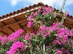 Cascading bougainvillea filled balcony