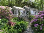 Rhododendrons by the main entrance to Paradise Cottage, your vacation in June