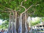 Tree, Downtown, Neighborhood, Town, Palm Tree