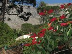 The stunning view of Table Mountain from the garden.