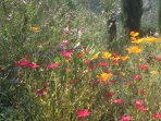 Many of the borders an terraces are planted with wild meadow flowers creating a riot of colour.