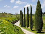 Stunning drive through the winding roads of Chianti