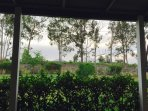 The relaxing outlook from the front deck looking across to the vines at Kelman Estate.