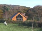 Cabin set apart surrounded by fields of Galloway cattle, woods and hills.
