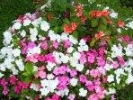 Flowers on the premises.