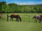 Horses grazing across the fence.