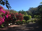 The property features a multitude of tropical flowering plants and exotic trees.