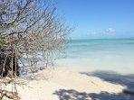 Living in balance with the precious mangroves at Casablanca beach