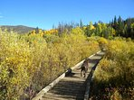 Local favorite  - Rainbow trail is nearby which offers great hiking for all seasons.