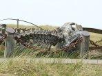 whale skeleton on the boardwalk