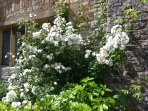Rambling Rector!