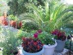 Garden/terrace area