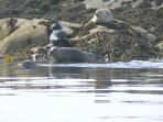 You will see seals, we will inform you where to spot them, OS maps in GFH
