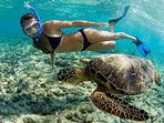 Start your day by snorkeling with honu.