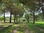 Abitazione Federico il viale d'ingresso circondato da ulivi, pini oleandri