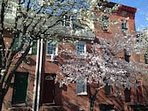 Frontage in Spring (Blossoms)