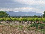 Our next door neighbors viines in May.  Luberon range in background.