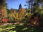 Autumn Garden 2016