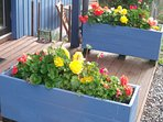 Planters in summer.