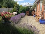 July, lavender in full bloom around the decking.