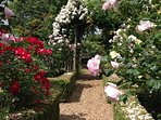 Stroll through the traditional English country rose garden