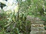 La scalinata tra una natura lussureggiante