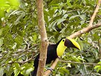 One of our daily Visitors, the Toucan