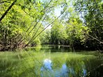 The mysterious Mangrove Forest of Terraba Natl Park, largest in Central America