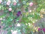 Le mur de fleurs
