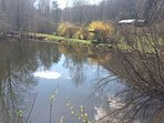 fish in stocked trout pond, play games on open field, explore 6 acre property.
