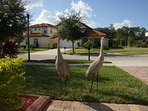 These Sandhill Crane Birds come back to Gino's Vacation Home each winter.
