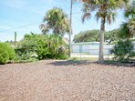 Yard, Palm Tree, Tree, Vegetation, Fir