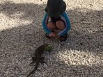 At 10am everyday, kids can feed the iguanas between the Surf & Ocean Clubs.