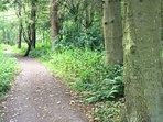 Northumberland has some great woodland walks
