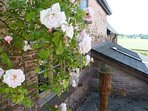 Roses over the wall , Cider Cottage. The old water pump in the fore-ground
