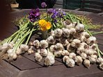 We grow garlic for market on our property which is being developed as a permaculture plot