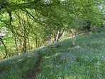 Spring at Maesydderwen is stunning, the 42 acres of land includes 12 acres of woodland