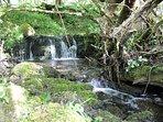 Babbling streams and tumbling waterfalls flow through Maesydderwen's 42 acres of land.
