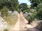 Dirt road to Trullo sull'Aia