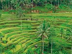 Tegallalang rice field terrace. Tours/excursions with our driver (surcharge).