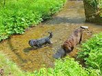 Guest photo. Enjoying a splash in the river (dogs are welcome at no extra cost)