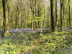 visit nearby bluebell woods in the spring time